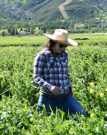 Dr. Sarah Light sampling cover crop biomass in one of the CIG reduced disturbance cover crop fields in Guinda, CA