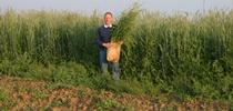 IMG 0320 for Conservation Agriculture Blog