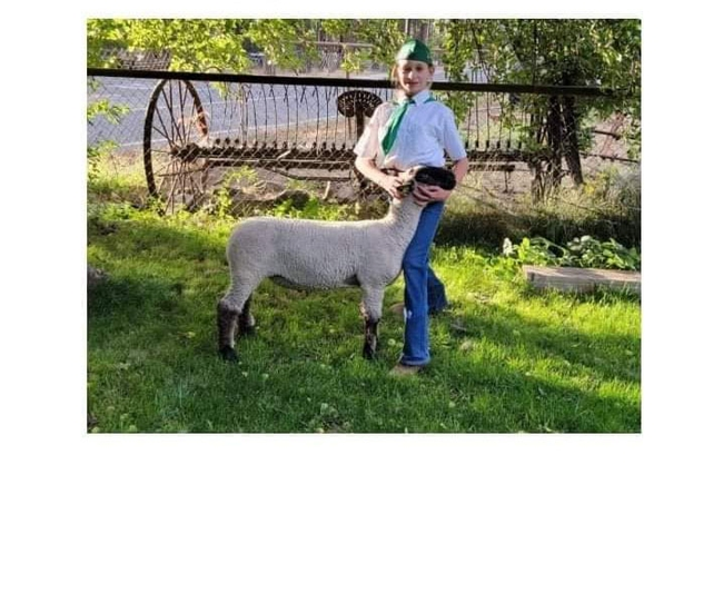 Mia of American Valley 4-H with whether lamb Domino (1st year)