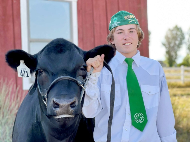 Blaine of Sierra Valley 4-H with black Angus steer Curious George (4th year)