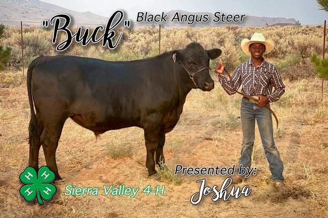 Joshua of Sierra Valley 4-H with Black Angus steer Buck (1st year)