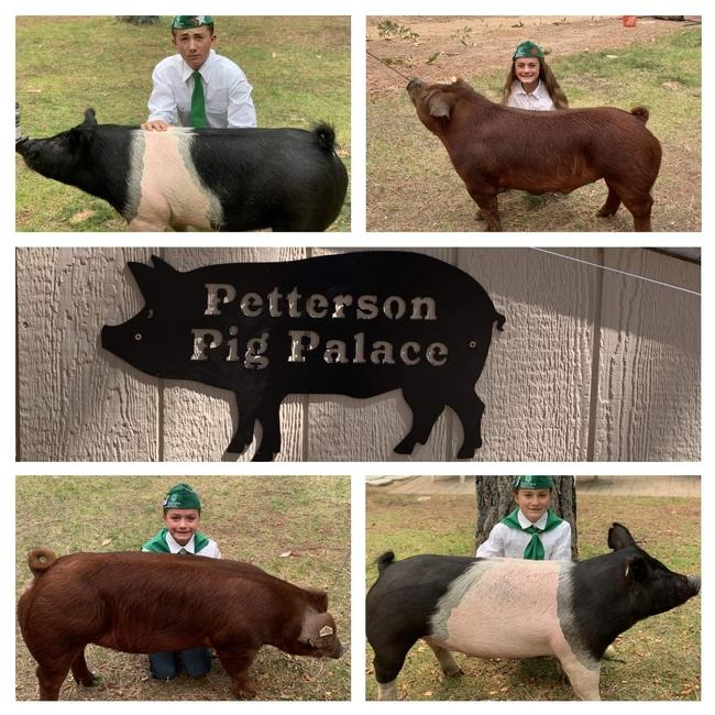 Petterson kids with their swine projects, American Pharoah, Kasper, Hamburger and Salsa