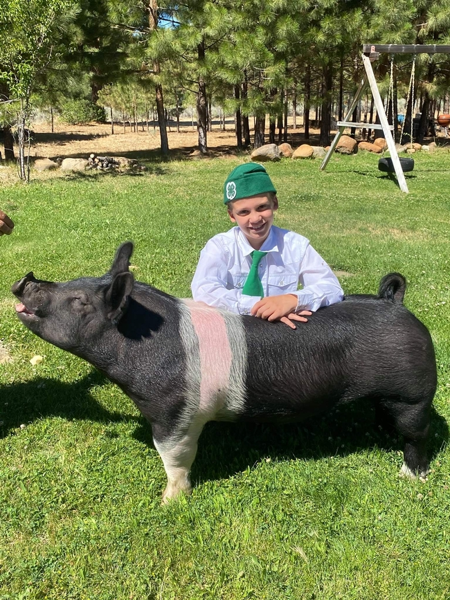 James of Echo 4-H with Hampshire cross pig Sweet Pea (Sweets)