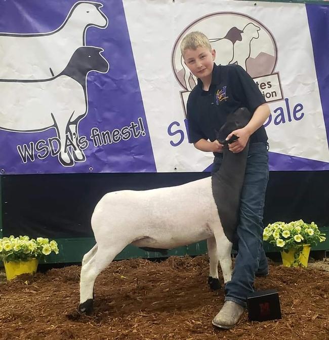 Justus of Sierra Valley 4-H with Dorper lamb Bob (4th year)