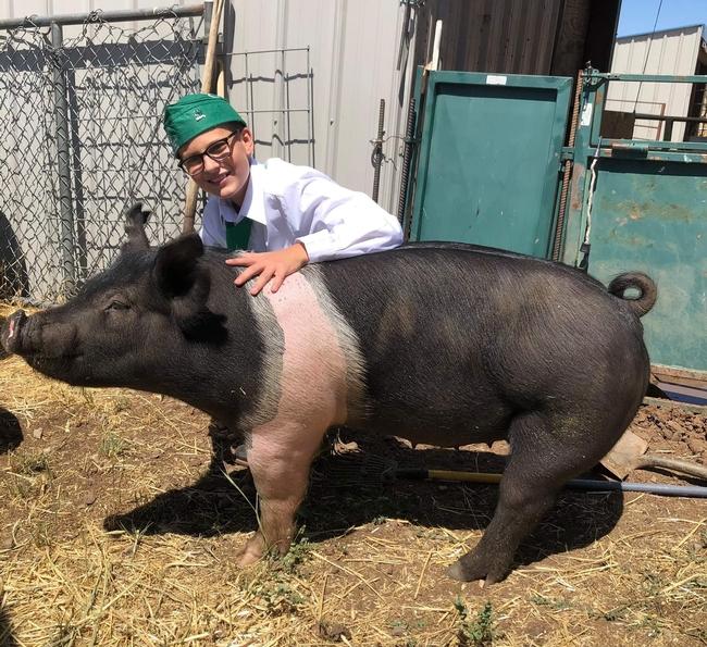 Preston with Hampshire cross pig Charlie