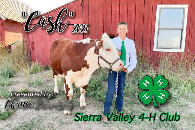 Chance of Sierra Valley 4-H with Hereford steer Cash (1st year)