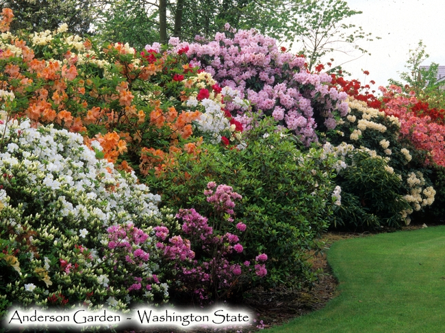 Anderson Garden Photo by Don Wallace