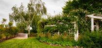 Landscape backyard for The Coastal Gardener Blog