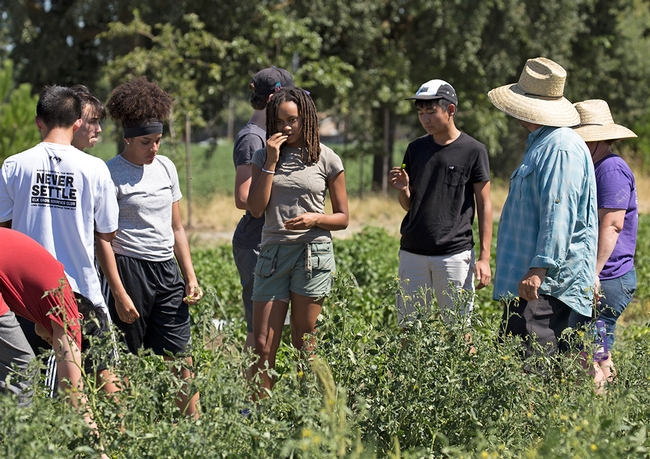 The STEAM camp students toured The Cannery, an urban farm in Davis.
