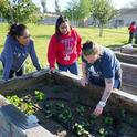 Left to right, Cynthia, Jasmine, and Darcy work in the garden.