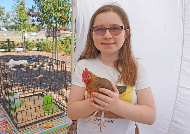Sunset 4-H member Kate Straub shows off her old English game hen.