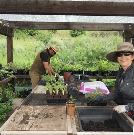 UC Master Gardener volunteers Devra Laner and Ned Lange prepare tomato plants to give to Oakland students and their families.