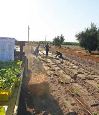 UC offers an online pumpkin-growing contest for Fresno County 4-H members