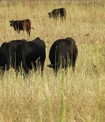 Match.Graze and SD Grazing Exchange work to connect landowners and livestock managers
