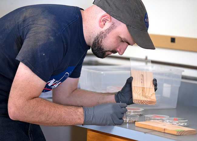 Daniel Perry places termites in blocks, which will be put in the walls of the house before heat treatment.