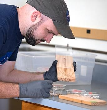 Termites can't hide from heat and essential oils, finds UCCE study