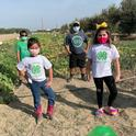 The UC Kearney Agricultural Research and Extension Center organized a socially distanced pumpkin growing contest in Fresno County during 2020 for local 4-H members, providing opportunities for enrichment and engagement.