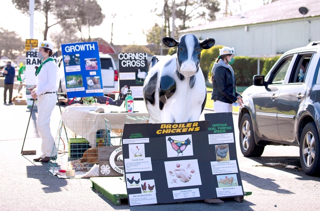 4-H members wearing the white and green uniforms are surrounded by posters about chickens. A brown chicken looks out from a cage on the ground as visitors in cars stop to talk.