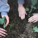 Students at Mother Lode Regional Juvenile Detention Center plant seedlings.