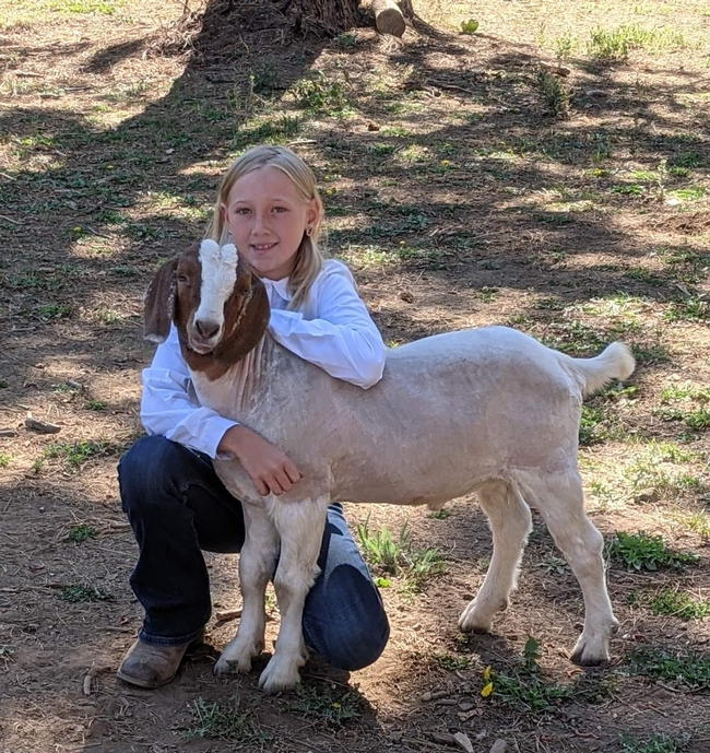 Blonde girl crouches with her arms around the neck of a goat that has a brown and white face.