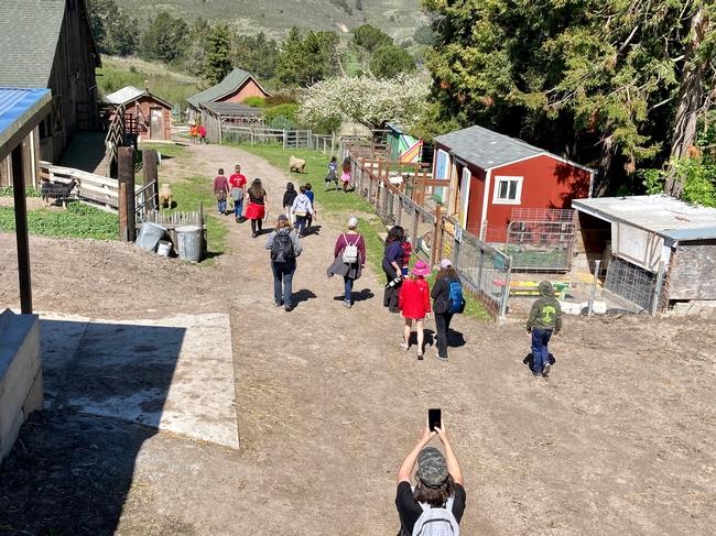 A group of children walk down a dirt path between livestock pens.
