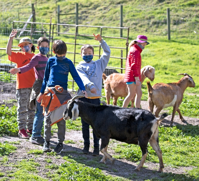 Students outdoors, some with hands raised, while others pet goats.