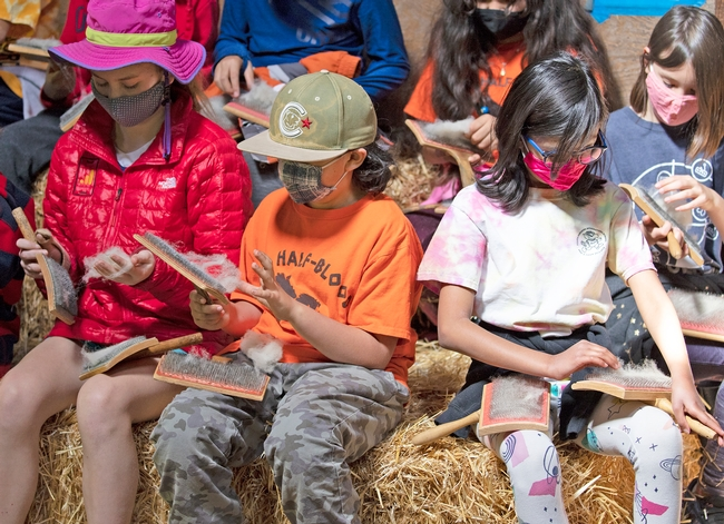 Group of students sitting on straw bales comb the wool with carding tools.