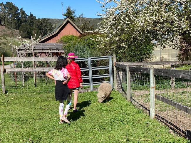 Two girls approach a sheep grazing on grass.