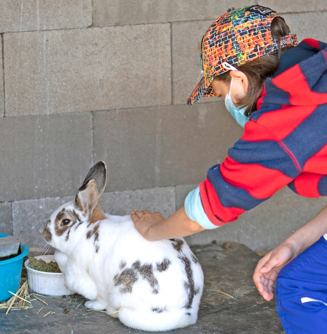 Child in hat and red and blue-striped shirt strokes the back of a rabbit that has a white coat with brown spots.