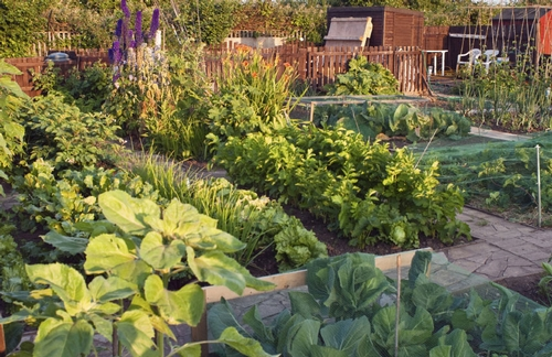 Vegetable-Garden-Photo-Web-