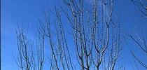dormant tree IPM for Fruit & Nut Center Updates Blog