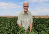 Red River Farms - Blythe, CA Entomologist Dr. Vonny M. Barlow of UCANR- Riverside surveying cotton for BSB