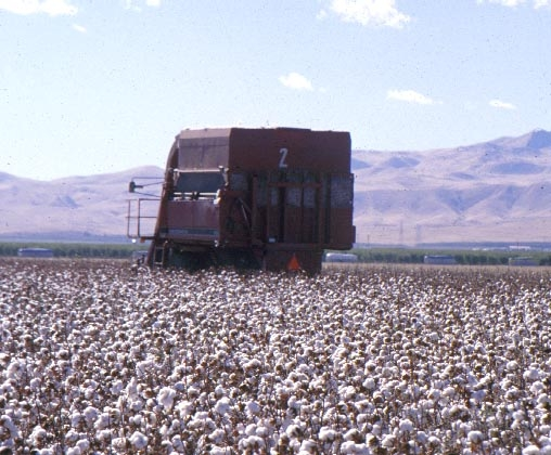 A large cotton harvester picks white cotton lint with hillsides in the background.