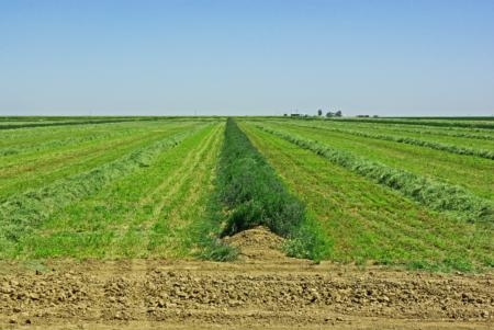 habitat preservation thru alfalfa strip harvest