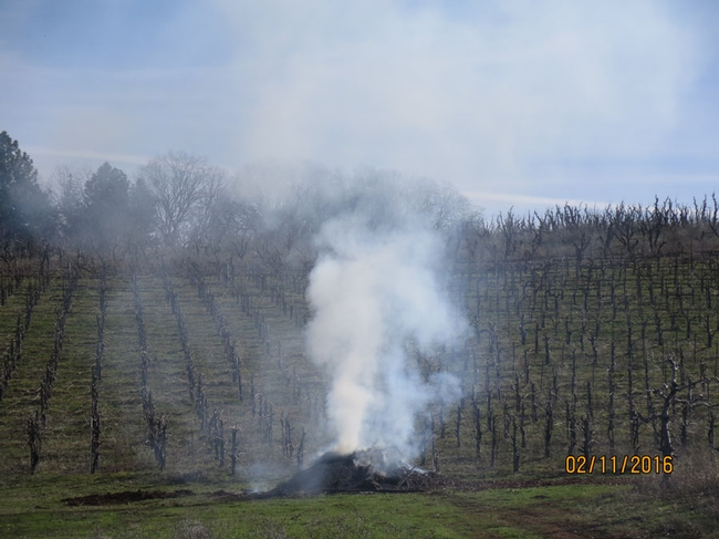 A smoky pile of prunings.