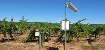 Amador Eagle was the first mildew station in the foothills, now there are six! for Foothill Fodder Blog