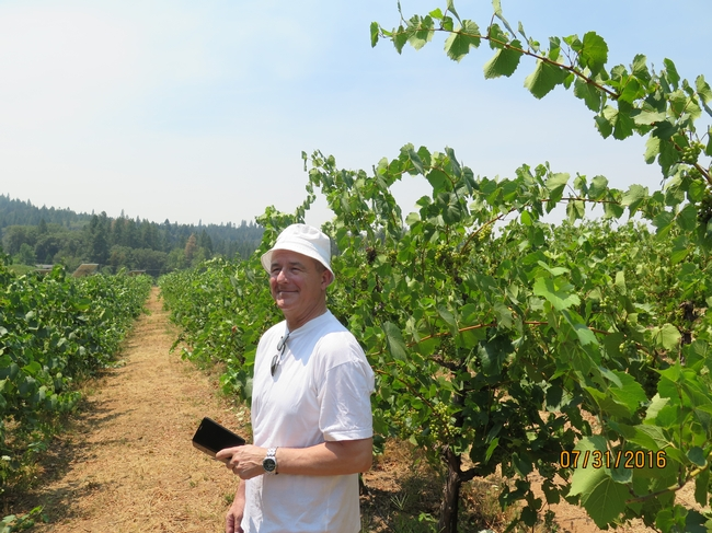 A man standing in a vineyard.