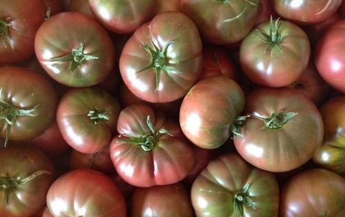Cherokee Tomatoes