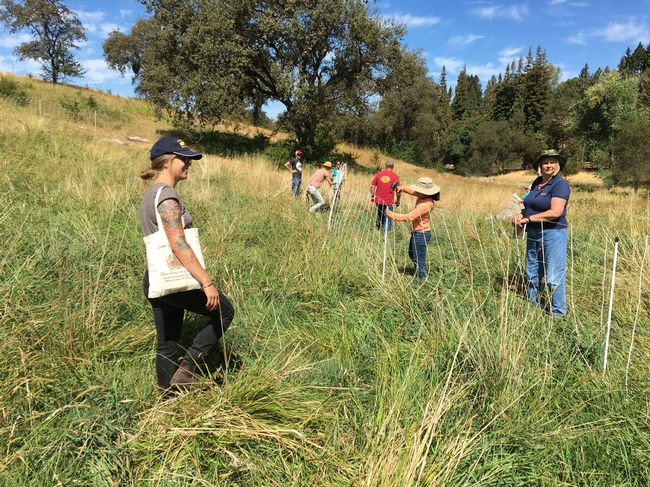 Grazing workshop students putting up temporary electric fence netting.