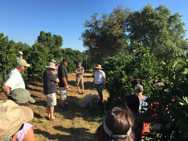 Citrus growers listening to small farm advisor, Cindy Fake talk about the citrus research trials.
