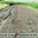 Erosion comparison, control on the left, cover crop on the right.