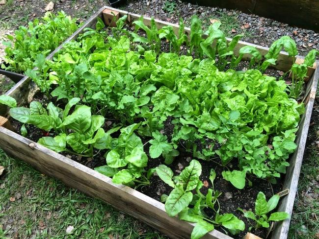 2020 Summer Vegetable Gardening - Milnes