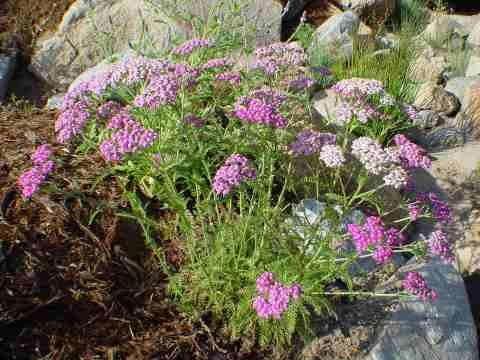 Demo Garden Photo 2 - Berg