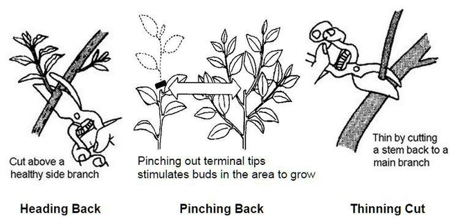 Pruning Terms - Illustrated