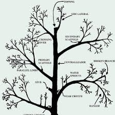Additional Pruning Terms - Illustrated