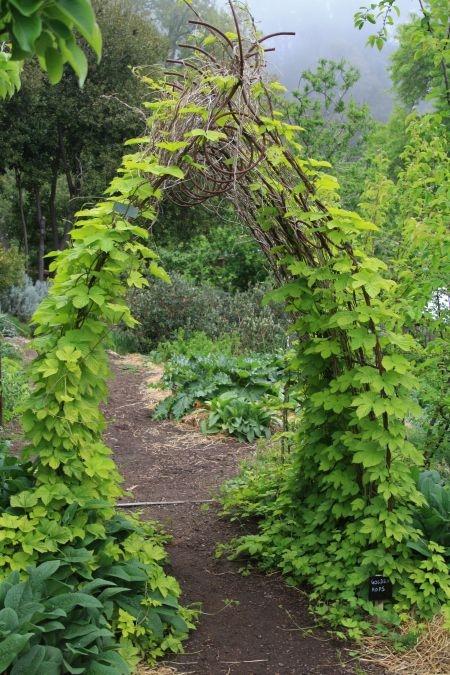 Herb Study - Photo 4