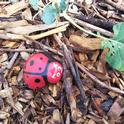 From    For the Garden Photo 1