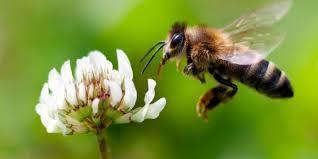 HoneyBeeLoyko