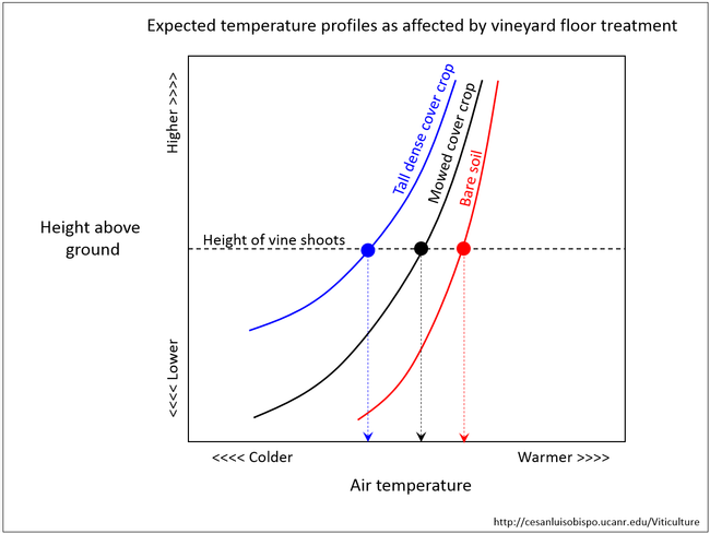 Figure 5. Expected air temperature profiles as affected by vineyard floor management.