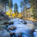 About 60% of California water flows from the state's forests, an invaluable ecosystem service.